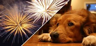 proteger cachorro fogos de artificio