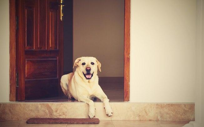 cachorro esperando na porta de madeira